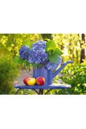Watering Can With Hortensia - 500