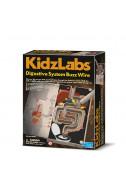 Детска лаборатория - Храносмилателна система чрез звънчева инсталация