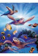 Turtles in Light - 500