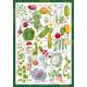 Пъзел Vegetable Garden - 1000