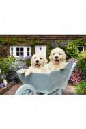 Кученца в количка